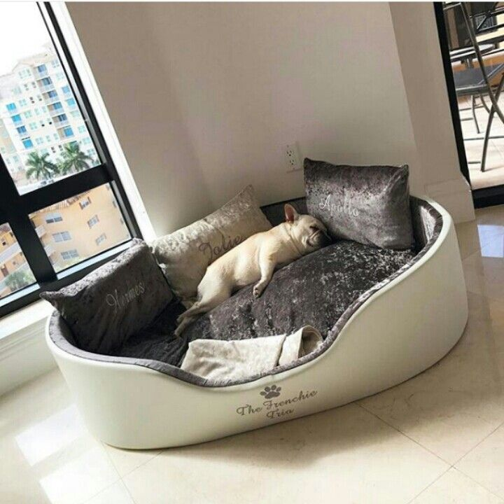 French Bulldog Living the Life