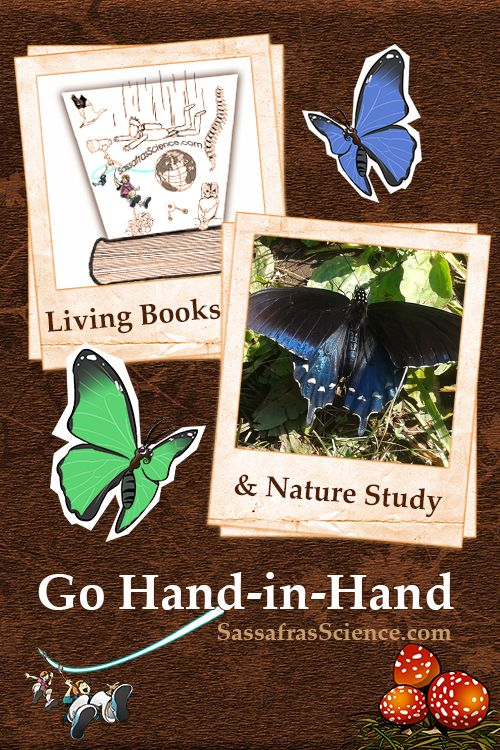 Living books and Nature Study – An educational match made in heaven {Sassafras Science}
