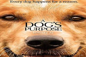 Download A Dogs Purpose Torrent Movie 2017 or film to your PC, Laptop And Mobile. Latest Movie A Dogs Purpose Torrent Download Link In Bottom. HD Torrent Movies Download.   #2017 #A Dogs Purpose 2017 torrent #A Dogs Purpose hd movie torrent #A Dogs Purpose movie download #A Dogs Purpose movie download torrent #A Dogs Purpose movie torrent #Adventure #Comedy #Drama #English