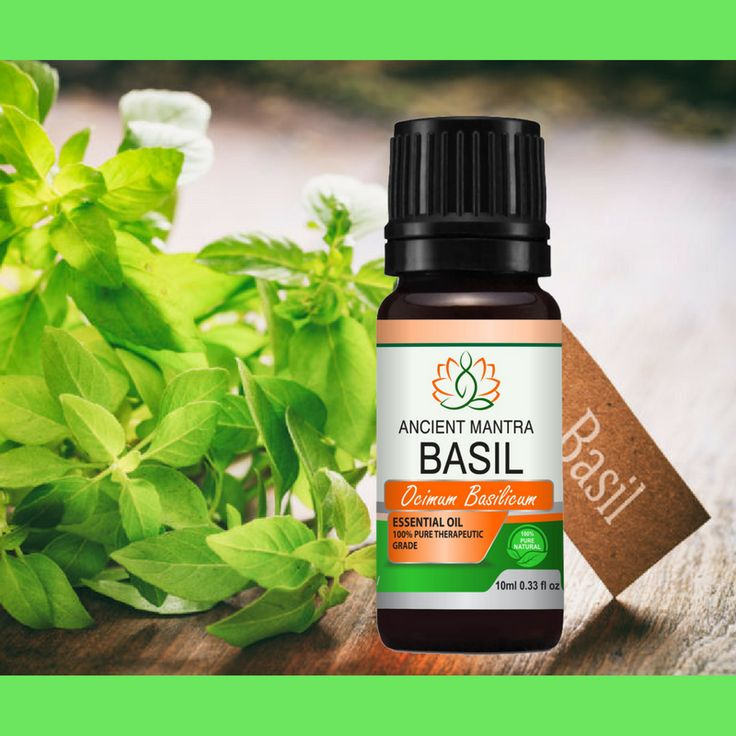 """""""Basil essential oil is effective in providing relief from colds, influenza and associated fevers. Due to its antispasmodic nature, it is frequently used to treat symptoms of whooping cough. """"#AncientMantraNaturals #Relax #SkinCare #Nature #lshoplocal #Handmade #EssentialOils #Relaxation #Aromatherapy #organic  #Health #Oils #Wellness #FeelGood #BasilOil #Relief #Cold #Cough"""