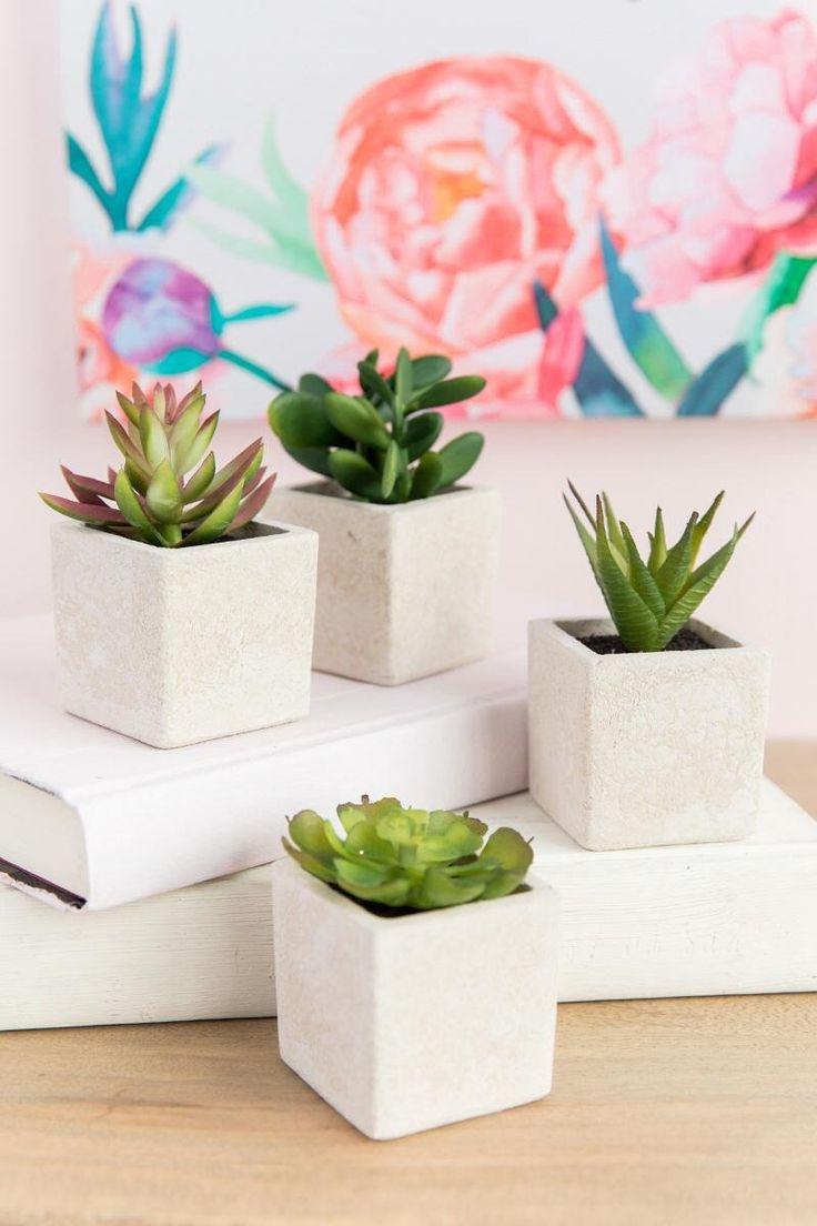 Ivory Succulent Set