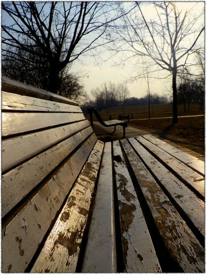 #bench #perspetive #nature