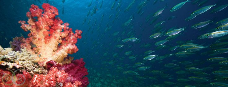 Diving Spots: 5 Lokasi Penyelaman Favorit Nicholas Saputra