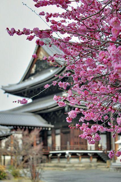 Nishi Honganji Temple   Flickr - Photo Sharing!