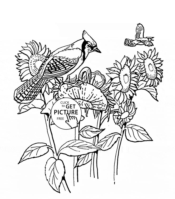 Sunflowers and Blue Jay bird coloring page for kids ...