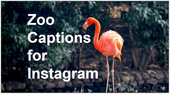 134 Instagram Captions For The Zoo Healthy Tips Zoo Pictures Instagram Captions Instagram Captions For Pictures