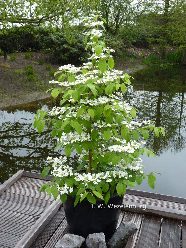 74 besten Pflanzen Bilder auf Pinterest Blumen, Garten und - poolanlagen im garten