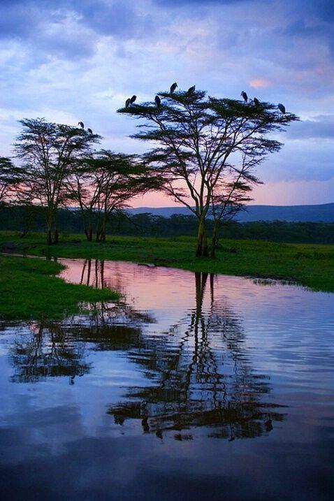 Maribou storks roosting at sunset, Lake Nakuru National Park, Kenya