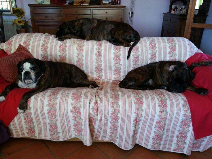Tutti sul divano