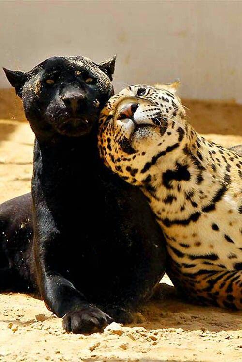 Love Hug Hd Wallpapers Jaguars I Loooohooove You Uhhhm Whaaaat Lets Just Be