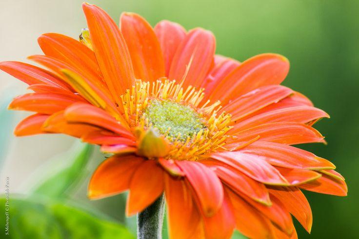 Orange by Photolab Pavia on 500px