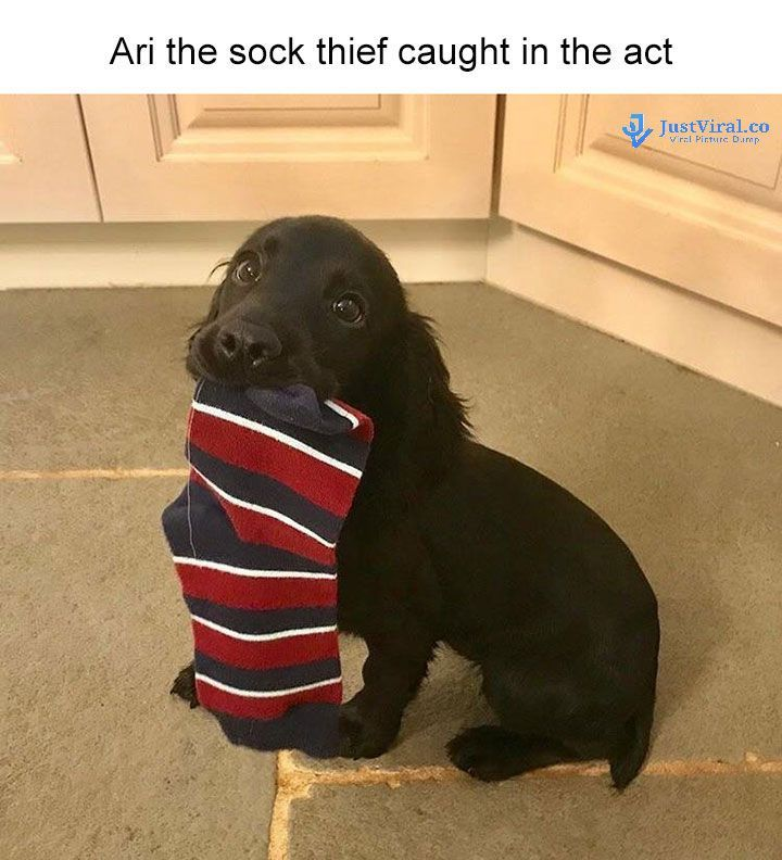 Funny Dog Memes That Will Cure Your Bad Day - 38