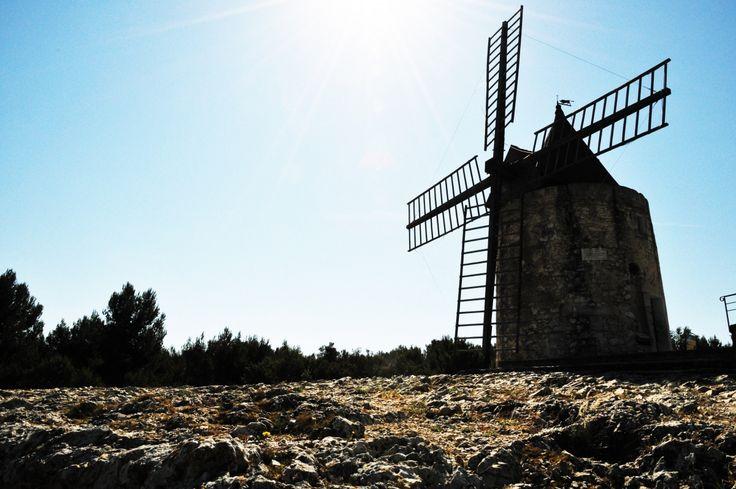 Actualités   Provence d'antan - herbes aromatiques, sels, épices et infusions