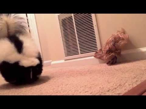 This Video Might Change Your Entire View Of Skunks