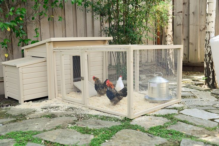 Two is better than one! Combined Fontana Barn with the Fontana Pen to give your chickens indoor and outdoor space.