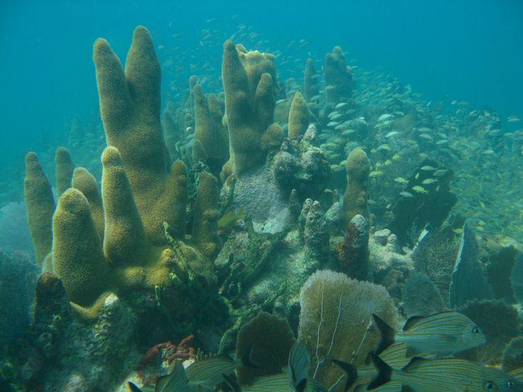 snorkel trip - Coffins Patch, Key Colony Beach Traveller