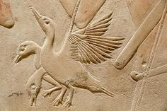 Tomb of Kagemni (detail - ducks), Teti cemetery, Sakkara, Ancien Egypt, 6th Dynasty.