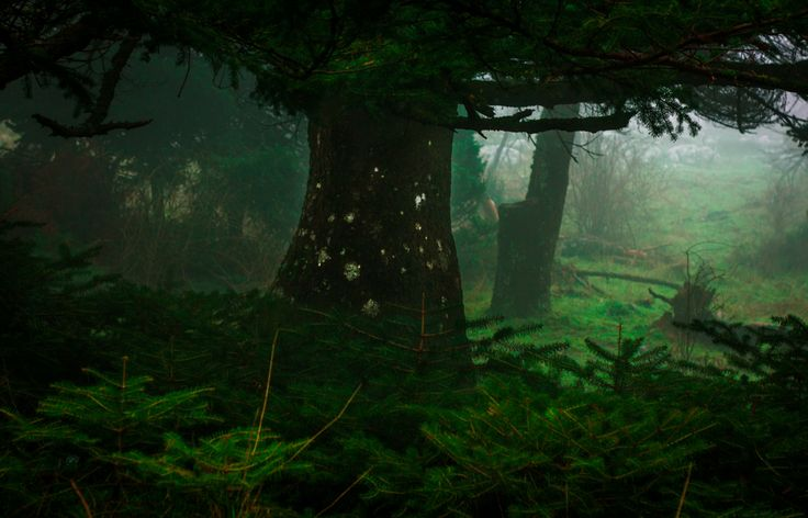 magical atmosphere in that misty old forest Parnitha National Park winter 2012