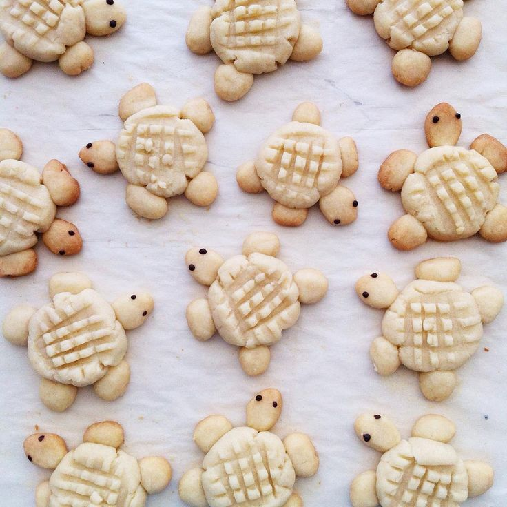 turtles peanut butter cookies sugar cookies turtle cookies turtle ...