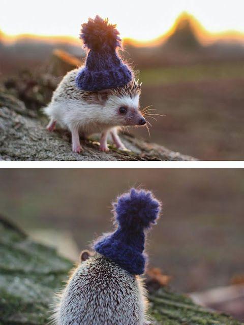 猫派でも犬派でもないハリネズミが可愛すぎる写真8枚【Nature】 ~ ミライノシテン