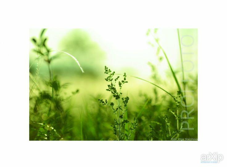 Авторские фотокартины: фотография, цветная фотография, пейзаж #photo #colorphoto #landscape arXip.com