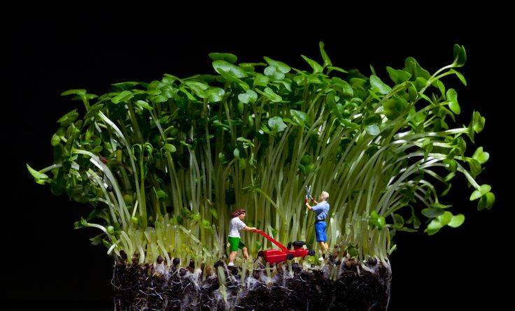 David Gilliver's little people – Tending to the garden