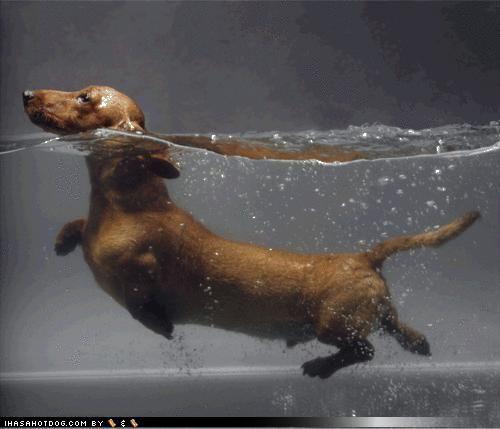 Water weenie!
