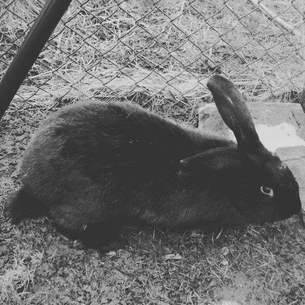 It's Tzimmes. To learn more about this rabbit like our facebook page link is in bio. #Hase #Kaninchen #кроль #whiterabbit #兔子 #králík #kanin #jänis #lapin #κουνέλι #kelinci #conejo #ウサギ #兎 #うさぎ #토끼 #nofilter #coelho #iepure #l4l #like4like #likeforlike #rabbit #rabbits #bunny #bunnies #rescue