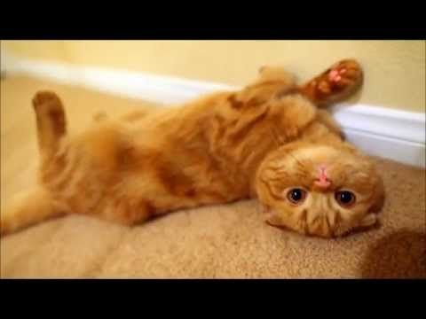 ▶ Смешные КОШКИ. ТВ - YouTube Awesome Collection of Cute Cat Clips