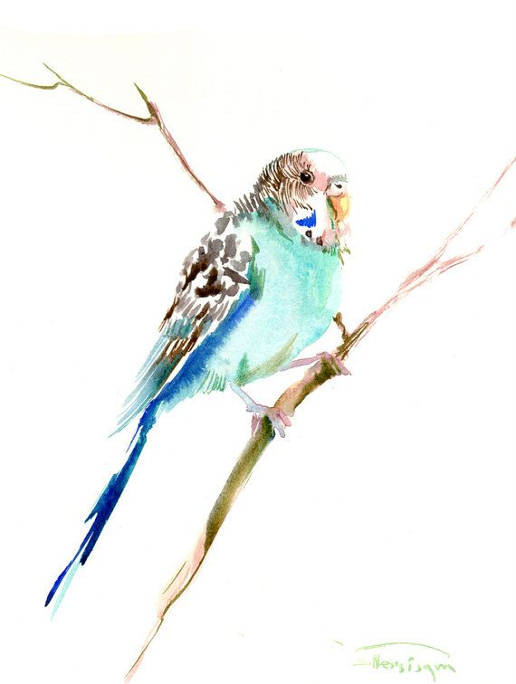 Parakeet original watercolor painting 12X 9 in by ORIGINALONLY