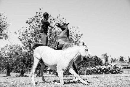 horse-sinphony-biza-style-036
