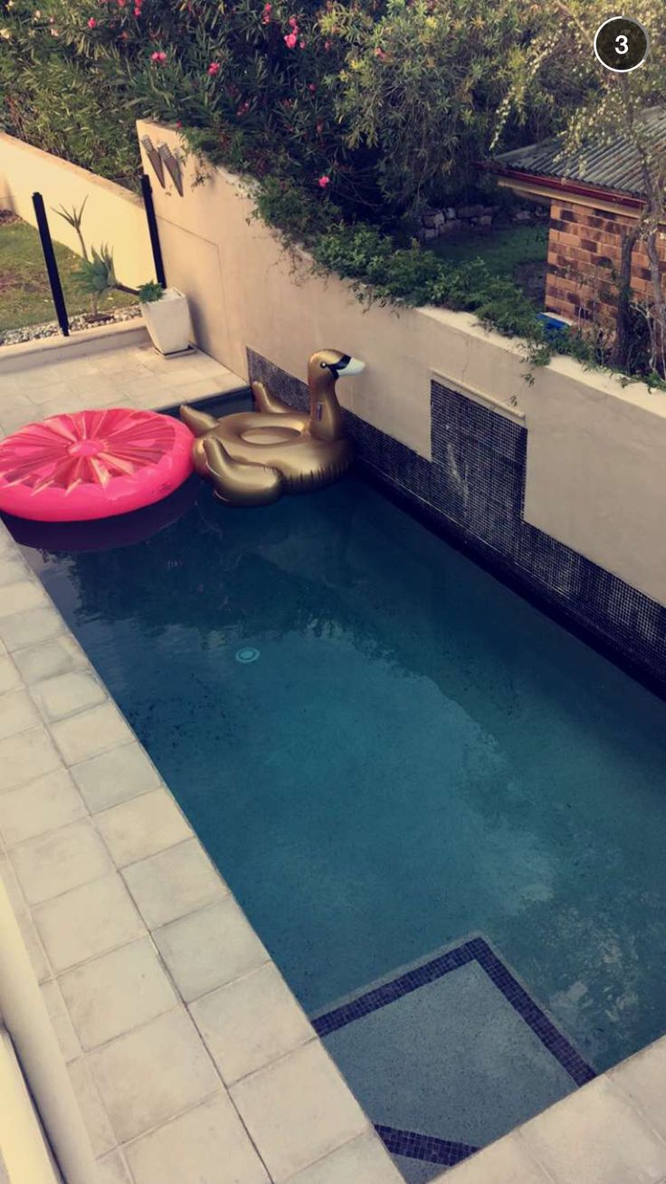 Gold swan ☀️