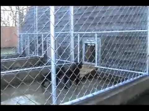 7-Week Old Puppies Using Heavy Duty Dog Door