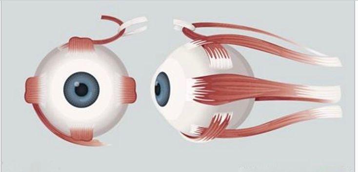 Quando o assunto é problema na vista, é preciso ter pressa.Felizmente, há alternativas naturais e seguras para quem tem a visão prejudicada.A deficiência nos olhos podem ser causadas por fatores, como:- Genética