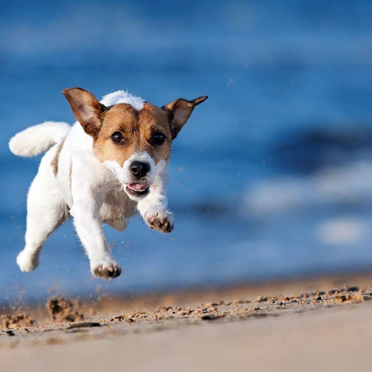 Die Strand Action am Wochenende war super, war ganz schön müde und hab entspannt geschlafen 😊 Guten Start in die neue Woche!   #fashion #style #stylish #shopping #luxury #lifestyle #duxiana #bett #dux #bed #beautiful #instagood #fun #love #amazing #smile #look #instalike #igers #picoftheday #dogbed #dogstyle #dogpic