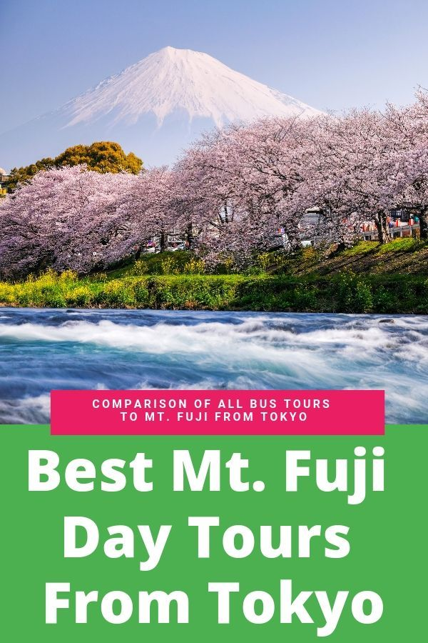 Best Cherry Blossom Tours Near Mt Fuji Blossom Cherry Fuji Mt Tours Day Tours Tokyo Tour Day Trips From Tokyo