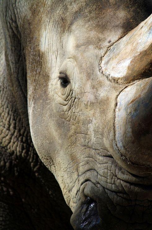 World Rhino Day, September 22nd http://www.youtube.com/watch?v=3wblRjxdoTc