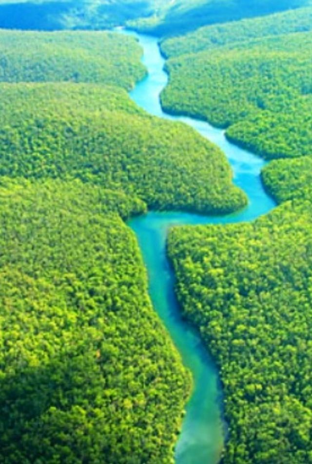 374 best images about The Amazon Rainforest on Pinterest | South ...