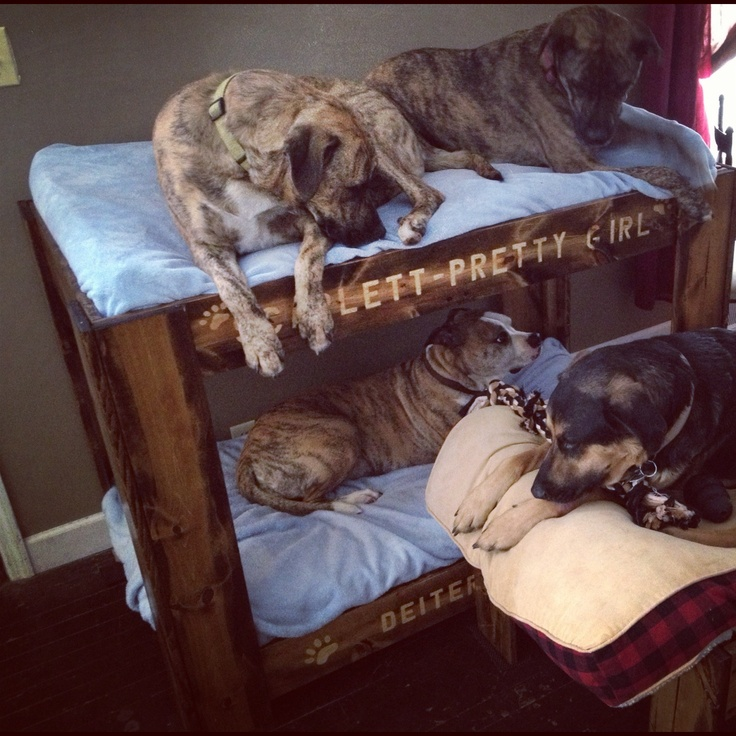 Doggie Bunk Beds # Dog Bunkbed # Doggie Bunk Bed # Bunk Beds For My Doggies