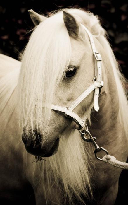 Fotoshoot van jou en je paard(en). | HorseStep