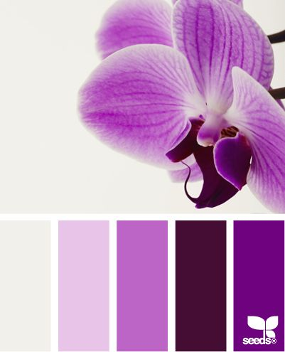 Purple | Inspiration for Art and Design: Palettes Featuring the Color #Purple