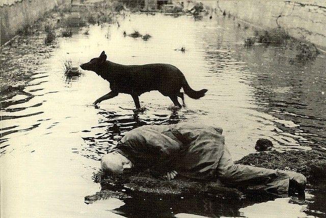 'Stalker (Сталкер)' Andrei Tarkovsky, 1979
