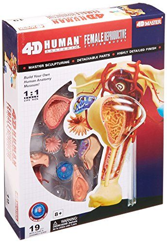Famemaster 4D-Vision Human Female Reproductive Anatomy Model -- Additional details @
