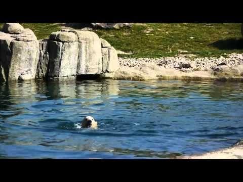 ijsbeertweeling op 23 april 2015 - YouTube