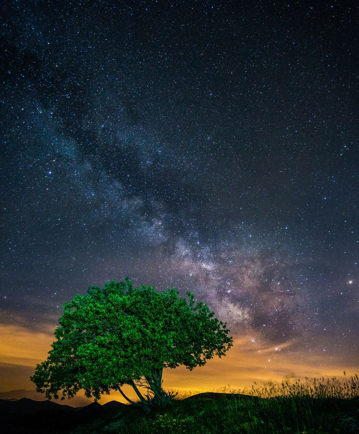 My Tree by Flavio Chioda on 500px