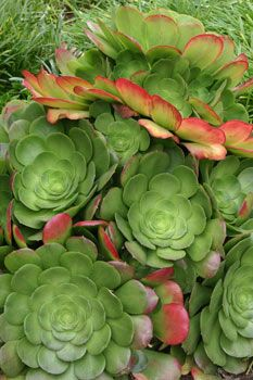 5 Tips for Starting a Succulent Garden