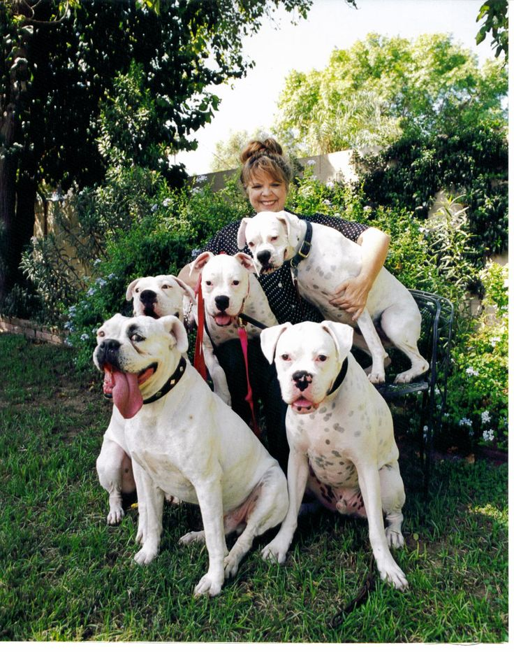 Boxer Luv Rescue...  Trish and her 'whites'