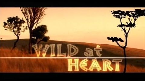 Wild at Heart UK tv series;   nice change of pace from all the detective shows but creatively done