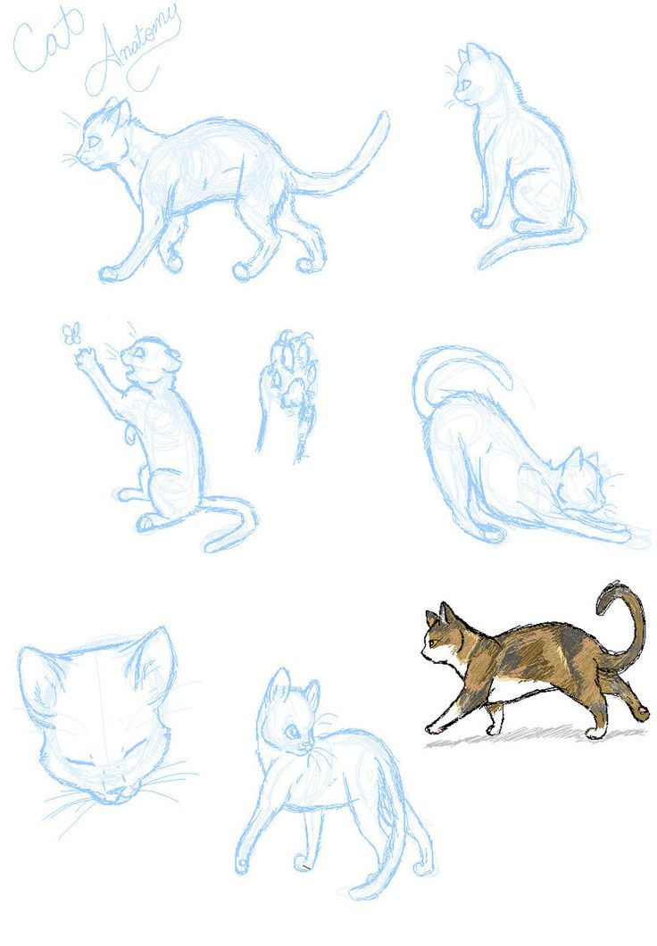 Cat Anatomy Practice By Sasoridanna94 On Deviantart