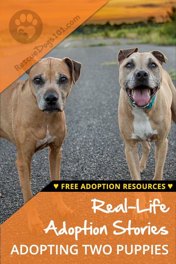 The Truth About Adopting Two Dogs At Once Adoption Stories Rescue Puppies Dogs